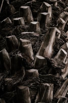 砍断的树桩