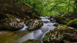 美丽的森林小溪