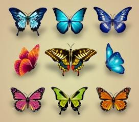 美丽的花蝴蝶素材下载