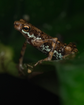 箭毒蛙图片写真