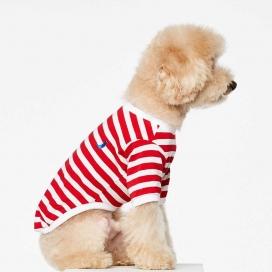 穿时髦针织外套的宠物狗