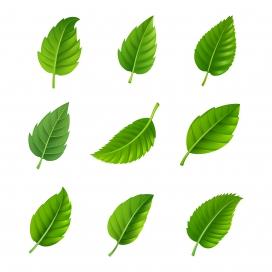 https://www.2008php.com/各种形状的绿叶集