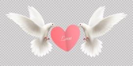 两只叼爱心的白色格子