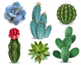https://www.2008php.com/逼真的3D荆棘仙人掌植物素材