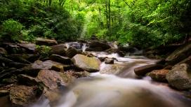 美丽的春季森林小溪