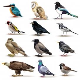鸟类EPS素材下载