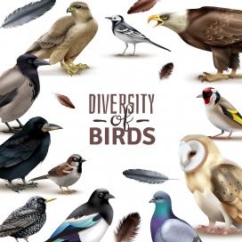 动物鸟类素材下载
