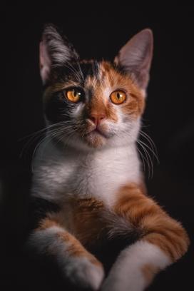 可爱的大眼家猫