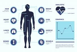 人体结构医学挂图素材