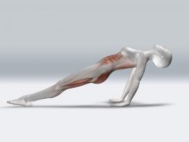 后仰的女性人体结构图
