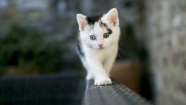墙根沿上行走的白色家猫