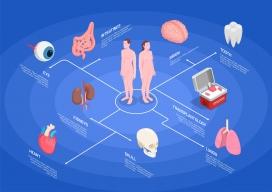 3D人体器官医学结构图