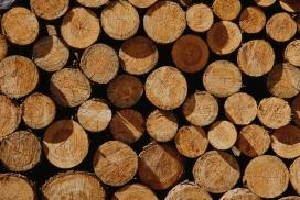砍伐后摆放整齐的木材