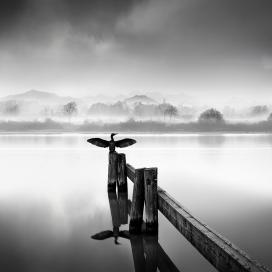 天堂鸟-湖边鸟黑白图