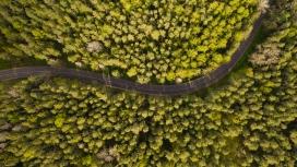高空俯拍的森林绿色路