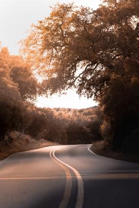早晨的弯道马路
