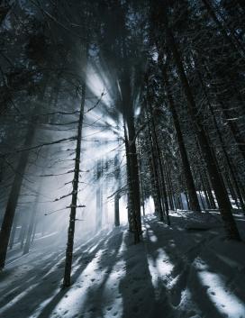 冬季阳光下的森林树木