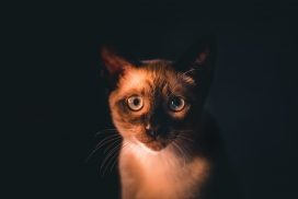 可爱的大眼猫