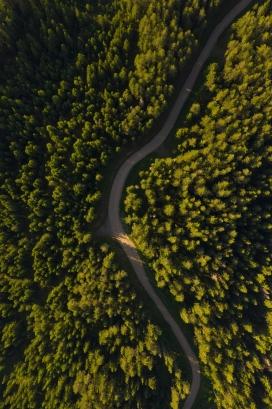 高空中俯拍的森林弯路