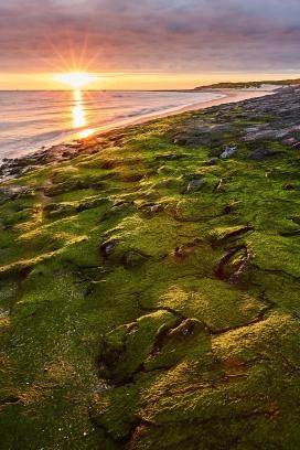 绿色草坪沼泽地的日出