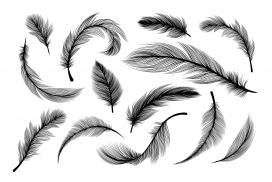 蓬松的羽毛黑白素材