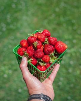 手端红色草莓的图片