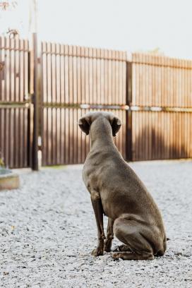 围栏中狗狗背景图