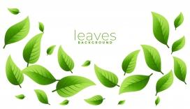 动感绿色叶子