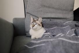 https://www.2008php.com/躲在沙发里的灰猫