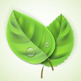 带水滴的绿色树叶