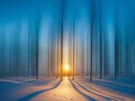 唯美的冬季森林日出图片