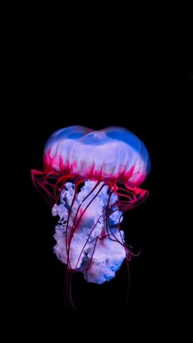 蓝紫色灯塔水母