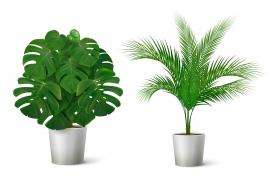 https://www.2008php.com/盆栽绿色植物素材下载