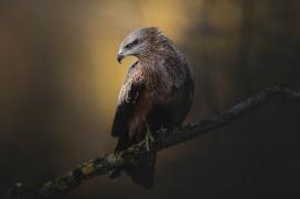 树干上的老鹰鸟